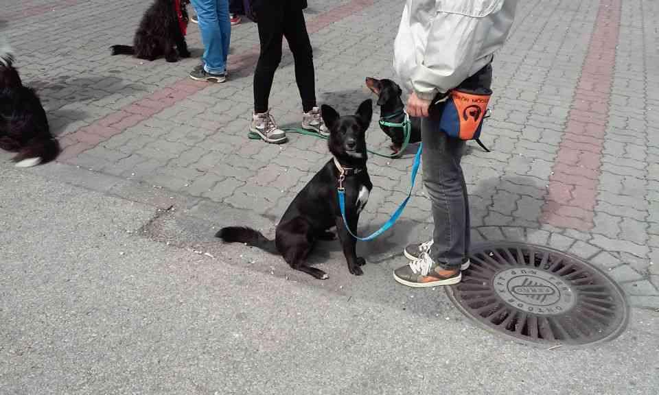 Loló kutyasuliban