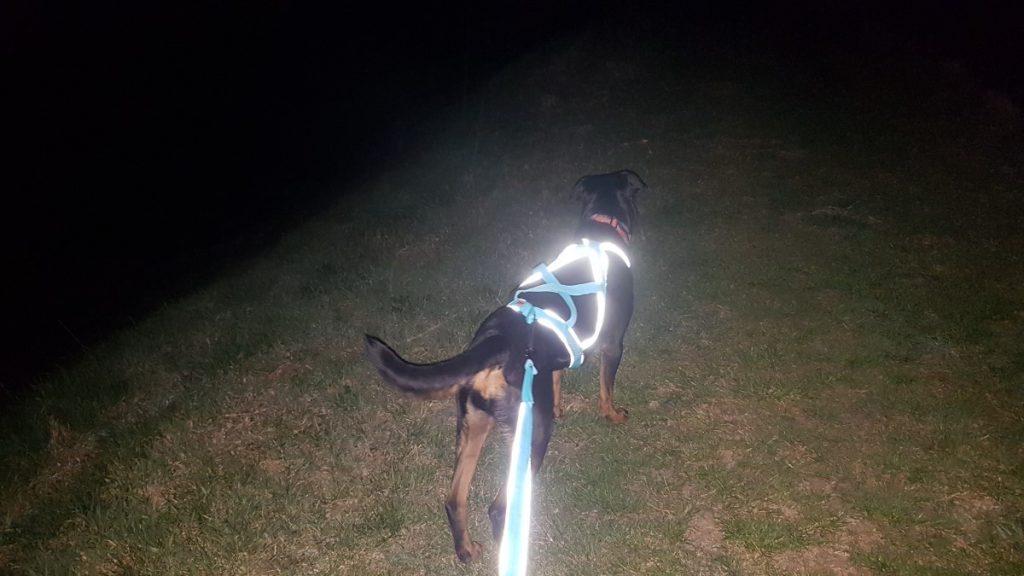 kutyás futás felszerelés - fényvisszaverő