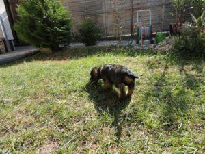 Kölyökkutya fejlődése - kert, levegő, mozgás