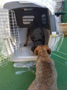 ismerkedés a kutyaboxszal