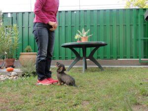 Kölyökkutya tanítása: ül, ültetés