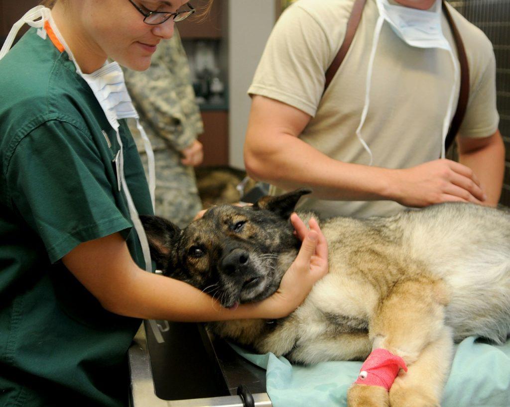 Kutya állatorvos