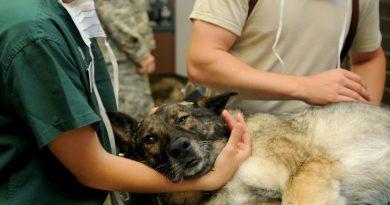 Kutya állatorvos, betegség
