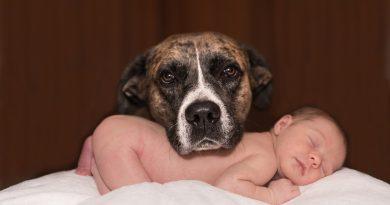 kutya és csecsemő