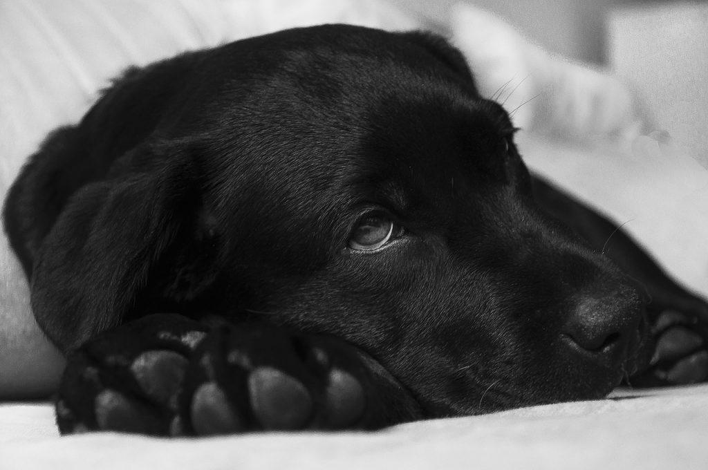 kutya betegségek