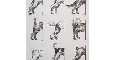 kutya faroktartás