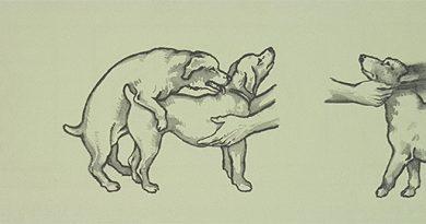kutya fedeztetés, kutya pároztatás