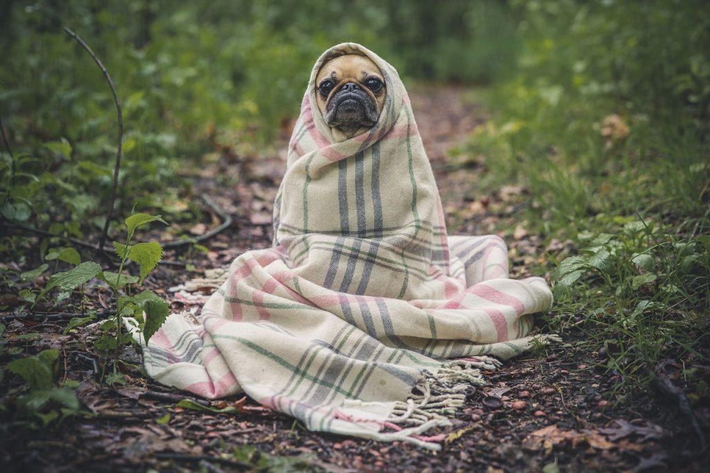 kutya fürdetés - megtörlés