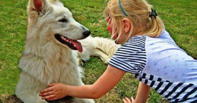 kutya-gyerek barátság