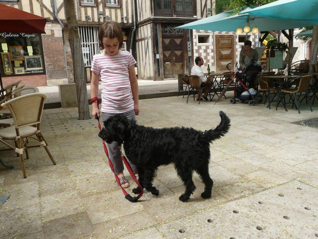kutya - gyerek kapcsolat