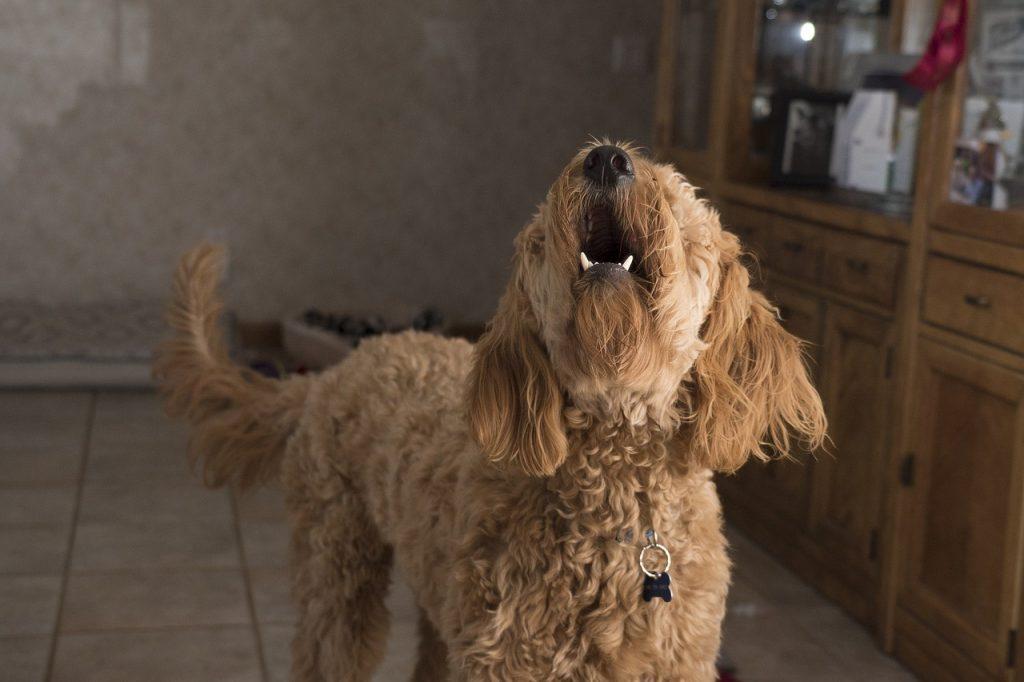 kutya hangok