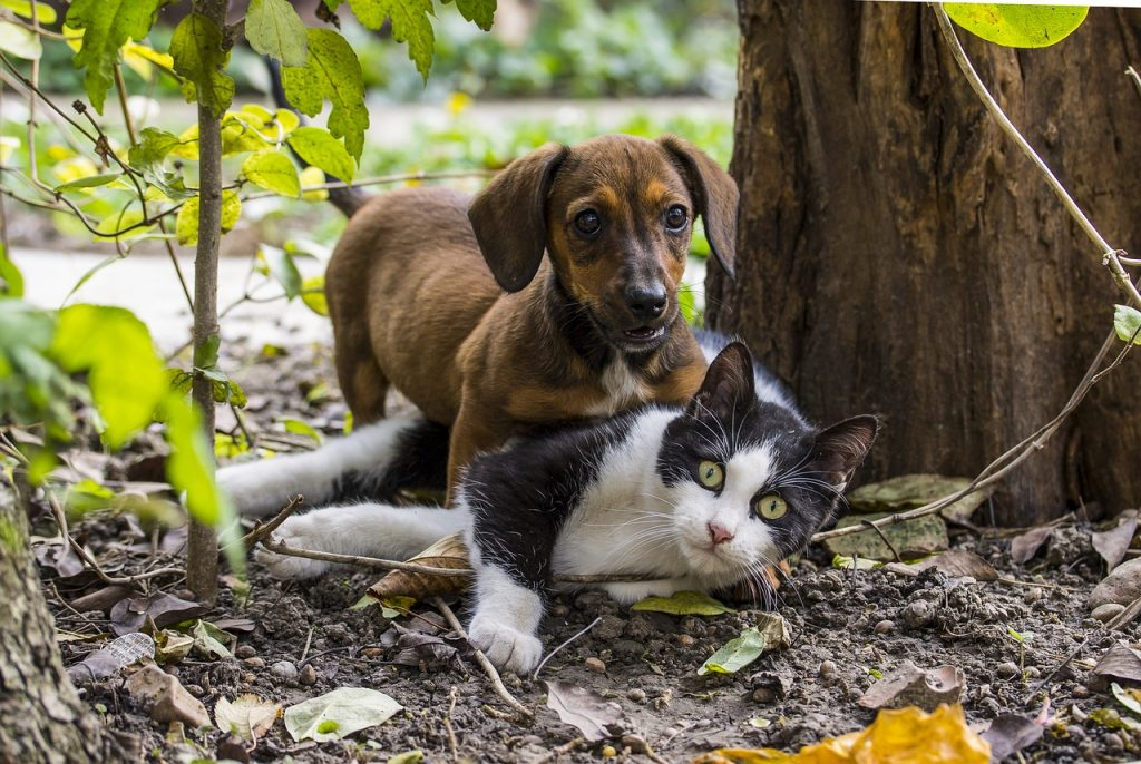 kutya - macska