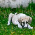 kutya remeg