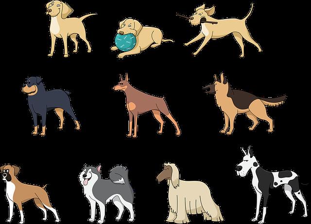 Kutyafajták - milyen kutya illik hozzám?