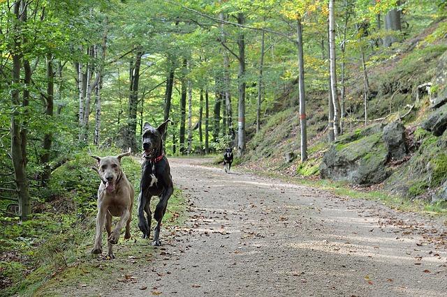erdőben futnak a kutyák