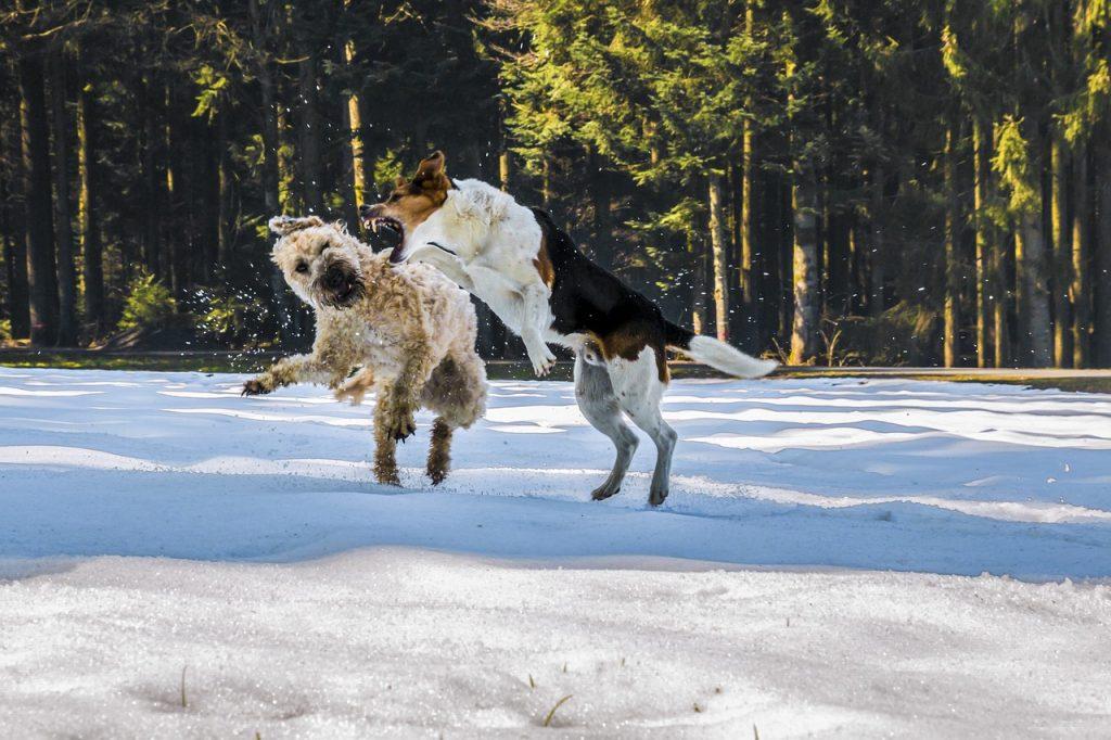 kutyák, harapás, veszettség jelei