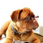 Kutyanevelés szabályai