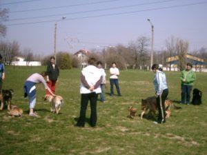 kutyaovi játék 2006