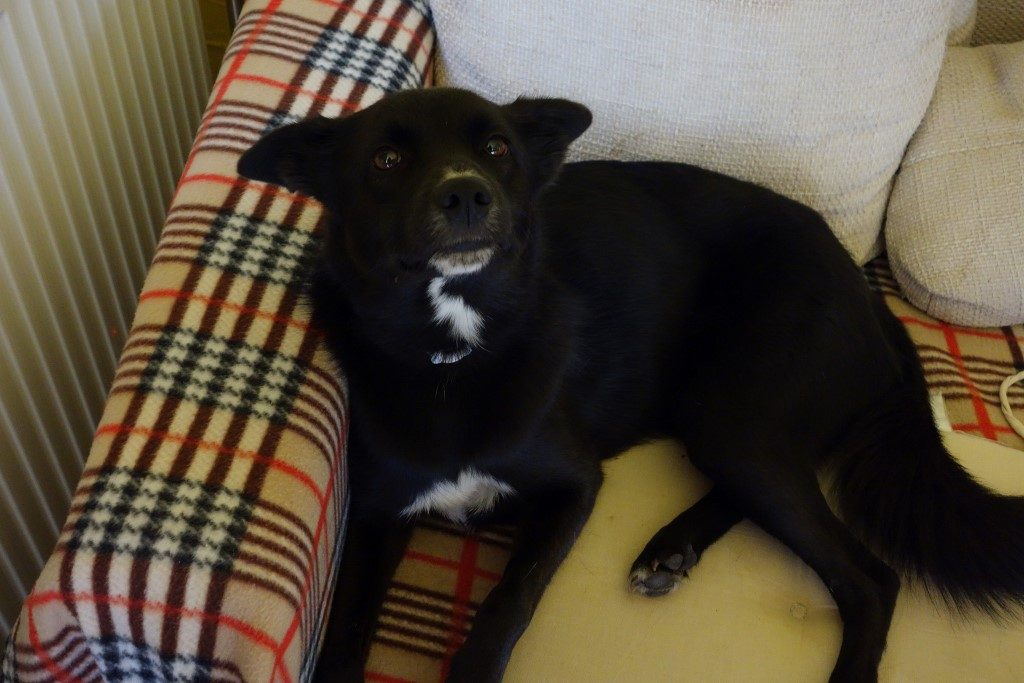 Loló - lakásban tartható kutya