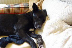lakásban tartható kutyák - Loló