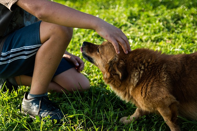 nyugodt, megadó kutya
