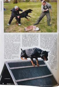 rottis kutyaújság