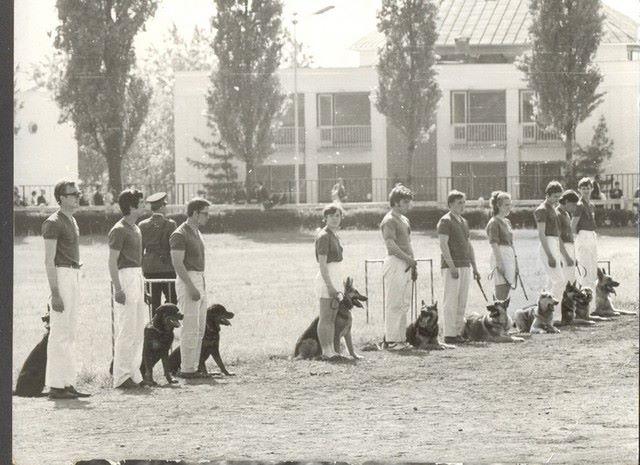 első rottweiler szuka Magyarországon és Győző