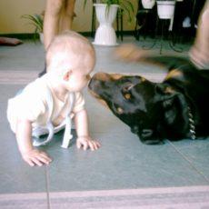 Rottweiler gyerek mellé