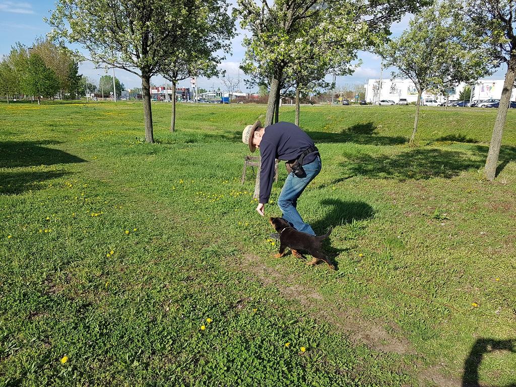 Rottweiler nevelése - Zami 2 hónapos