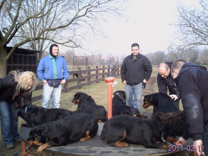 rottweiler tanítása