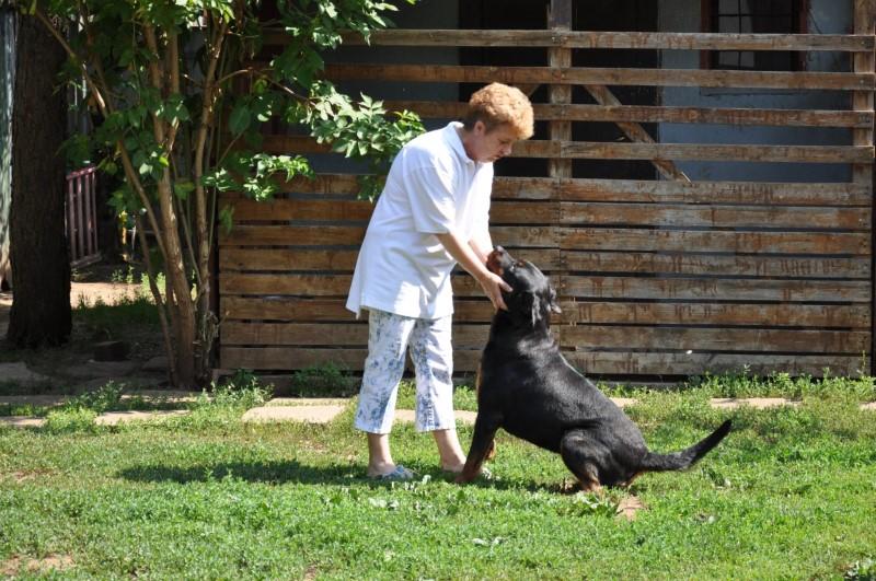 Siroccó Cintarella - rottweiler tenyesszuka