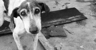 szopornyica, szomorú kutya